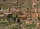 Harappan Archaeological Site